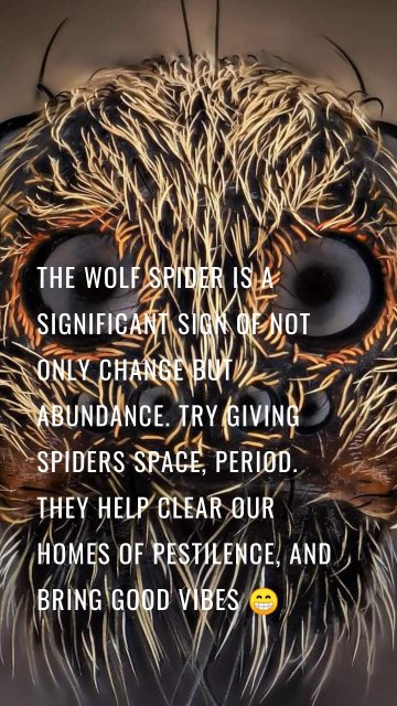 The wolf spider is a significant sign of not only change but abundance. Try giving spiders space, period. They help clear our homes of pestilence, and bring good vibes 😁