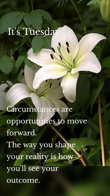 Circumstances are opportunities to move forward. The way you shape your reality is how you'll see your outcome. It's Tuesday