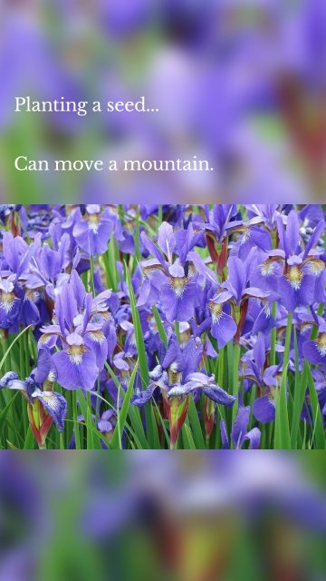 Planting a seed... Can move a mountain.