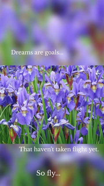 Dreams are goals... That haven't taken flight yet. So fly...