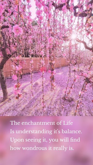 The enchantment of Life Is understanding it's balance. Upon seeing it, you will find how wondrous it really is.