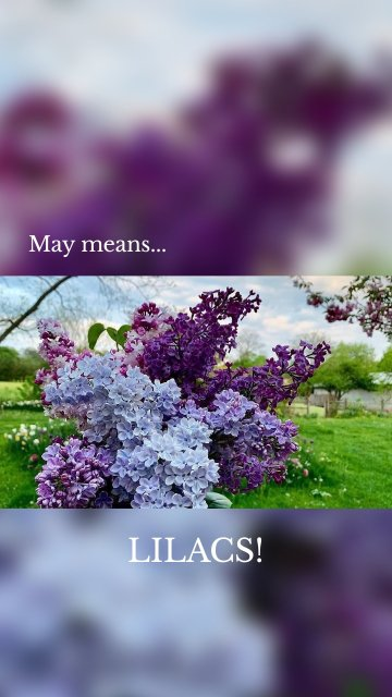 May means... LILACS!