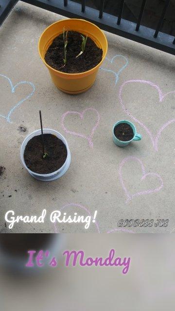 Grand Rising! It's Monday