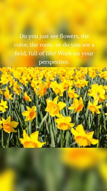 Do you just see flowers, the color, the roots, or do you see a field, full of life? Work on your perspective.