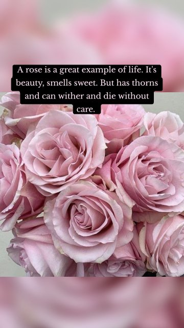 A rose is a great example of life. It's beauty, smells sweet. But has thorns and can wither and die without care.