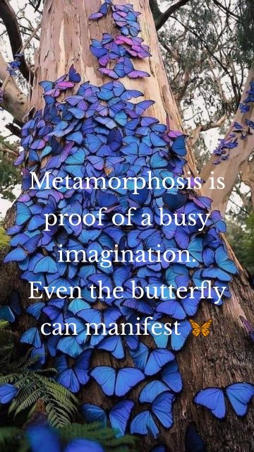 Metamorphosis is proof of a busy imagination. Even the butterfly can manifest 🦋