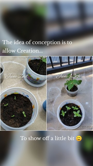 The idea of conception is to allow Creation... To show off a little bit 😊