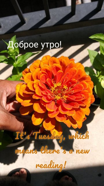 Доброе утро! It's Tuesday, which means there's a new reading!