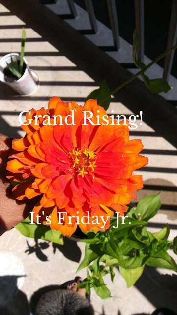 Grand Rising! It's Friday Jr.